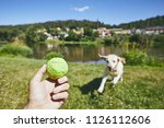summer time with dog in... | Shutterstock . vector #1126112606