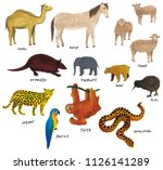 watercolor camel and horse ... | Shutterstock . vector #1126141289