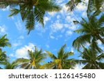 green palm trees leaves frame...   Shutterstock . vector #1126145480