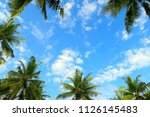 green palms frame on bright... | Shutterstock . vector #1126145483