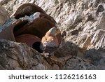 lesser kestrel  male at the...   Shutterstock . vector #1126216163