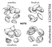 pistachios  brazilnut ... | Shutterstock .eps vector #1126287506
