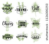 spice and herb hand drawn... | Shutterstock .eps vector #1126300253