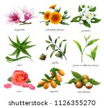 medicinal plants and flavors.... | Shutterstock .eps vector #1126355270