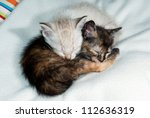 Stock photo cute kittens sleeping together 112636319