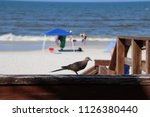 mourning dove bird perched on... | Shutterstock . vector #1126380440