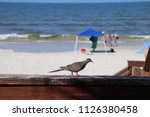 mourning dove bird perched on... | Shutterstock . vector #1126380458