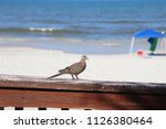 mourning dove bird perched on... | Shutterstock . vector #1126380464