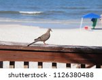 mourning dove bird perched on... | Shutterstock . vector #1126380488