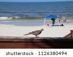 mourning dove bird perched on... | Shutterstock . vector #1126380494
