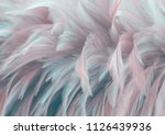 bird chickens feather texture... | Shutterstock . vector #1126439936
