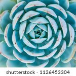 natural background cactus... | Shutterstock . vector #1126453304