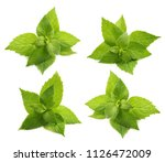 green mint leaves isolated on a ... | Shutterstock . vector #1126472009