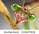 Praying Mantis Staring Back...