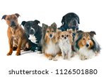 group of dogs in front of white ... | Shutterstock . vector #1126501880