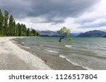 that wanaka tree moody skies | Shutterstock . vector #1126517804