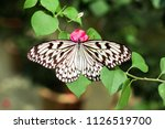 A Paper Kite Butterfly At...