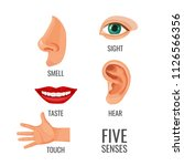 five senses with titles at body ... | Shutterstock .eps vector #1126566356