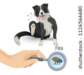 flea poster with scratching dog ... | Shutterstock .eps vector #1126566680