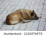 Sleeping Dog On Floors