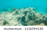 underwater  once colorful... | Shutterstock . vector #1126594130