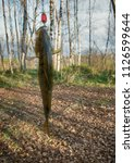 autumn perch from river among... | Shutterstock . vector #1126599644