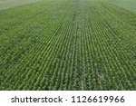 green corn field aerial  corn... | Shutterstock . vector #1126619966