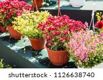 flowers in pots to decorate the ... | Shutterstock . vector #1126638740