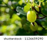 fresh organic green... | Shutterstock . vector #1126659290
