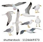 Beautiful Seagull Set  Gray And ...