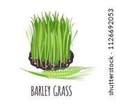 barley grass vector logo in... | Shutterstock .eps vector #1126692053