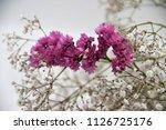 bouquet of dried flowers   Shutterstock . vector #1126725176