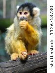 Squirrel Monkeys Are New World...