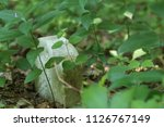 small child's tombstone lost... | Shutterstock . vector #1126767149