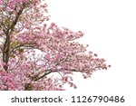pink flower tree isolated on... | Shutterstock . vector #1126790486