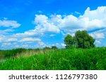 summer landscape with rural... | Shutterstock . vector #1126797380
