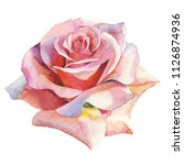pink rose realistic. floral... | Shutterstock . vector #1126874936