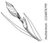 wildflower irises in a vector... | Shutterstock .eps vector #1126876799