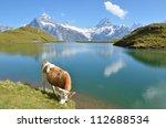 Cow on the Alpine meadow. Jungfrau region, Switzerland - stock photo