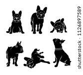 set of french bulldog...   Shutterstock .eps vector #1126897589