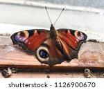 butterfly on window  | Shutterstock . vector #1126900670