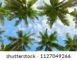 bottom view of palm trees... | Shutterstock . vector #1127049266