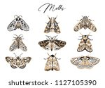 cute butterfly and moth... | Shutterstock .eps vector #1127105390