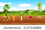 agriculture vegetables and... | Shutterstock .eps vector #1127136800