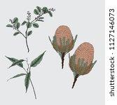 australian native banksia and... | Shutterstock .eps vector #1127146073
