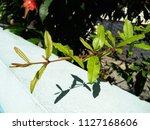 focus on sunshine on...   Shutterstock . vector #1127168606