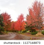 the stunning fall colors of... | Shutterstock . vector #1127168873