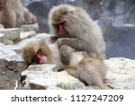 Two Snow Monkey's  Japanese...