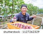 a man harvesting fig in the... | Shutterstock . vector #1127262329