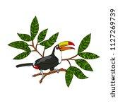 toucan bird. branches with... | Shutterstock .eps vector #1127269739